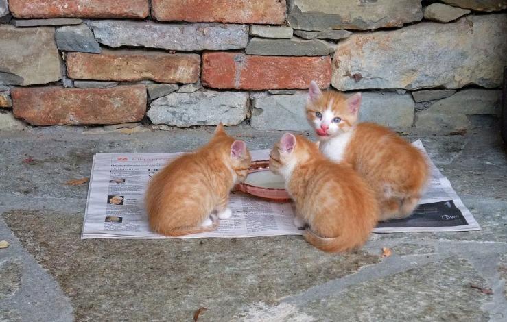 cat-214701_1920